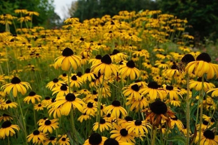 Nice flowers small field - djharty | ello