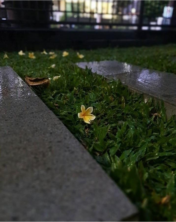 Flower, Rain, Grass, Leaf - flower - rikoyogapratama | ello