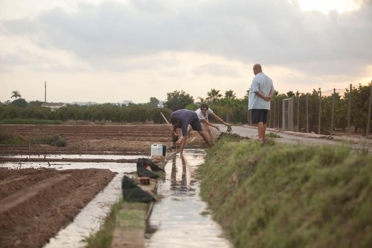 vegetables people food - planting - mikewater | ello