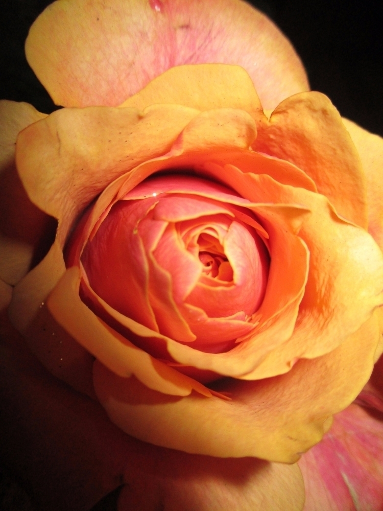 loved girl labia labiae - itstrue - pleasantcynic | ello