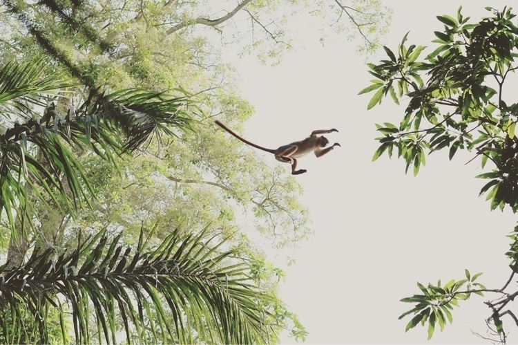 jungle, africa, photography, photographymagazine - miguelmanso | ello