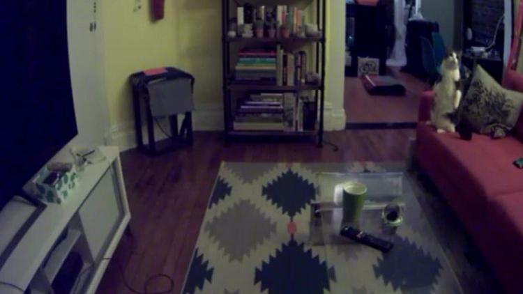 Gatos intentan «cazar» espíritu - codigooculto | ello