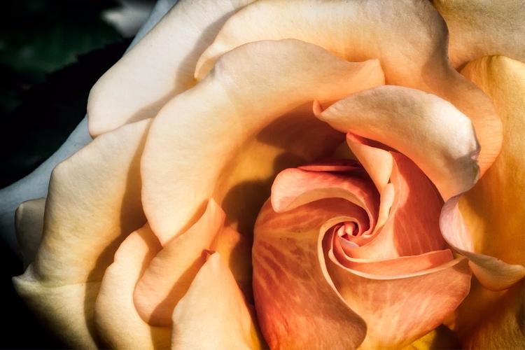 Vortex - flower, flowers, macro - doc   ello