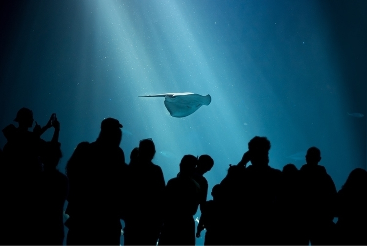 Monterey Bay Aquarium - monterey - hippieography   ello