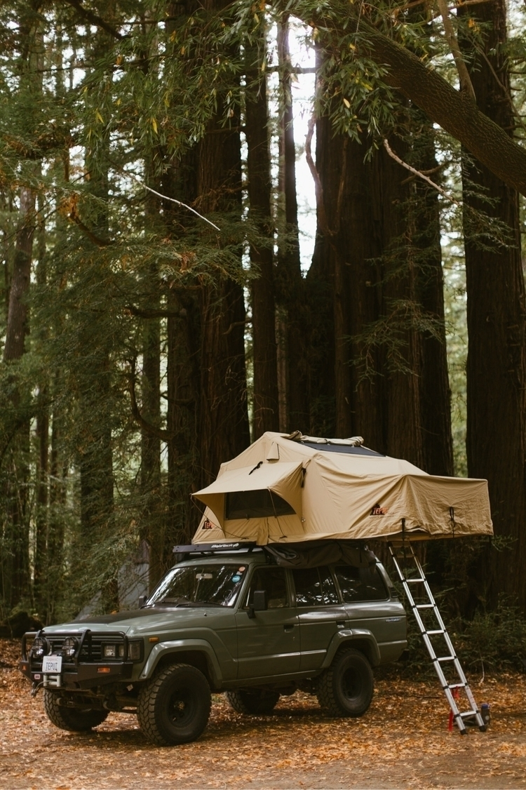 Sleeping redwoods weekend - peteramend | ello