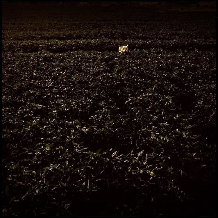 Simon walk countryside - 51. - danhayon | ello