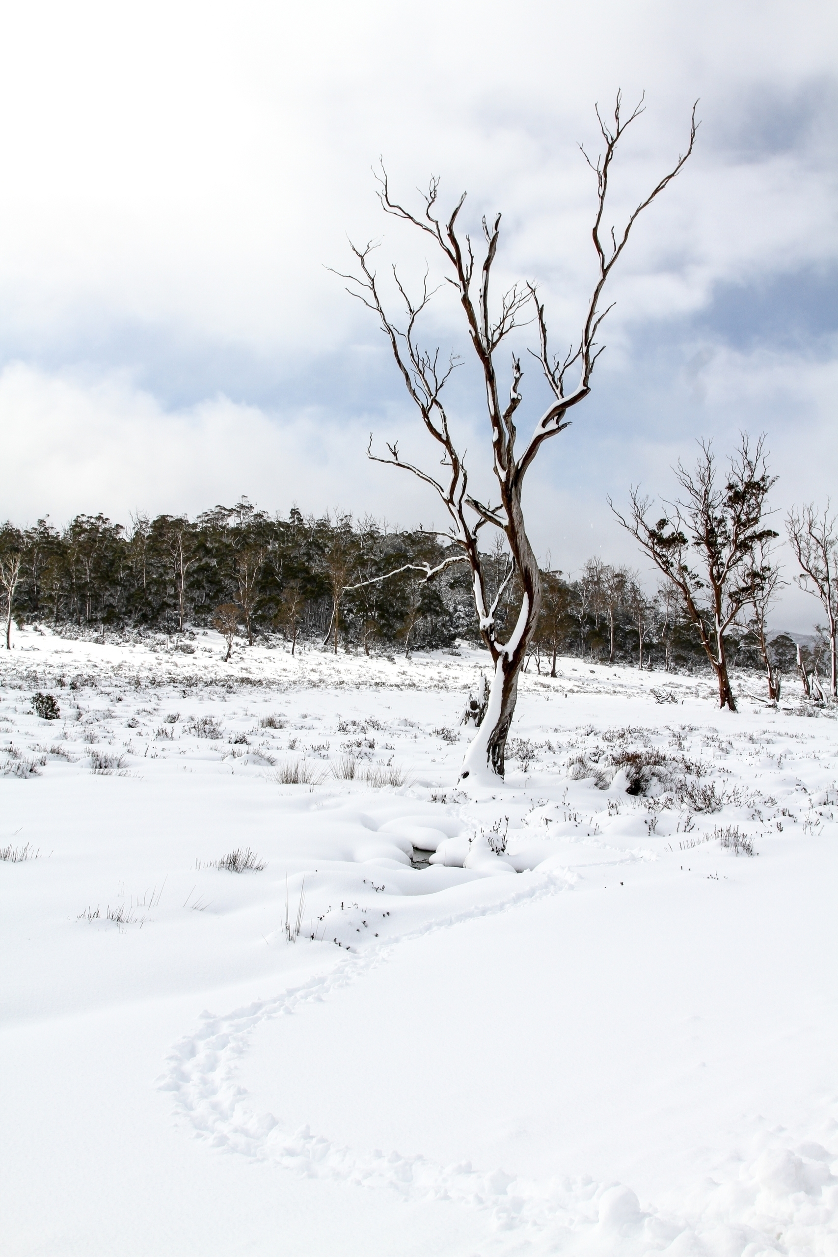 Spring snows, highlands - Tasmania - b_goat | ello