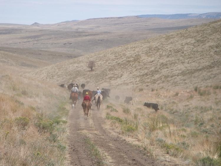 Pueblos Cowboy Horse TamaraEnz - aramatzne | ello