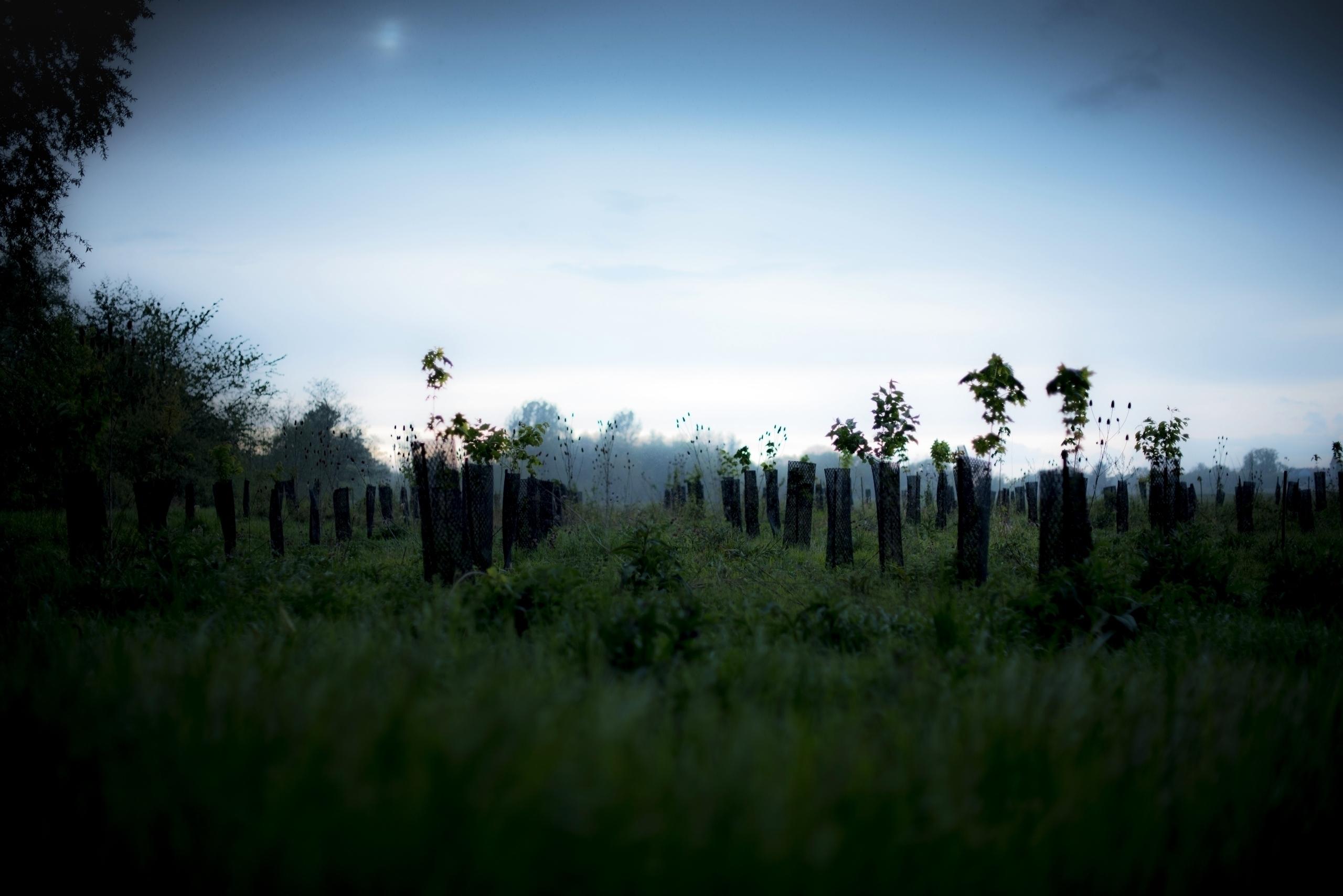 men; tree roots, stuck present - philippe_schoen | ello