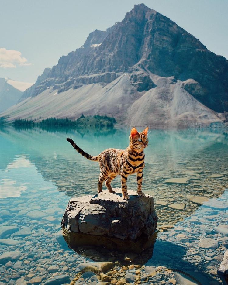 Meet Suki, Wondercat Star - Adventure - photogrist | ello