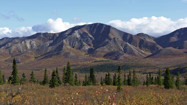 autumn park. Denali National Pa - lwpetersen | ello
