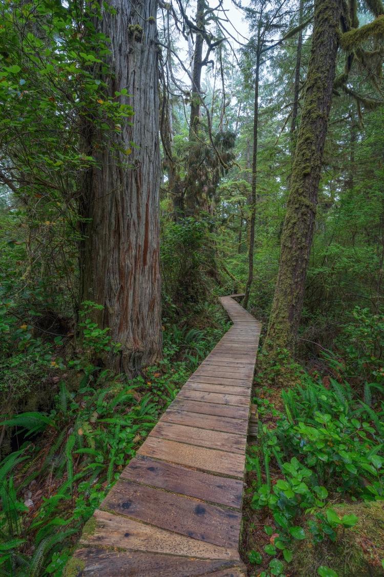 Firm Path Follow* Vancouver Isl - jeffmoreau | ello