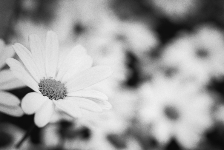 flowers - nature, natureart, botanical - peter_skoglund | ello