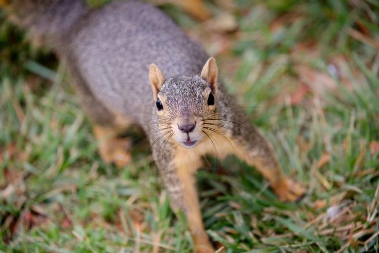 young squirrel, Lake Balboa Par - ellomaggie | ello