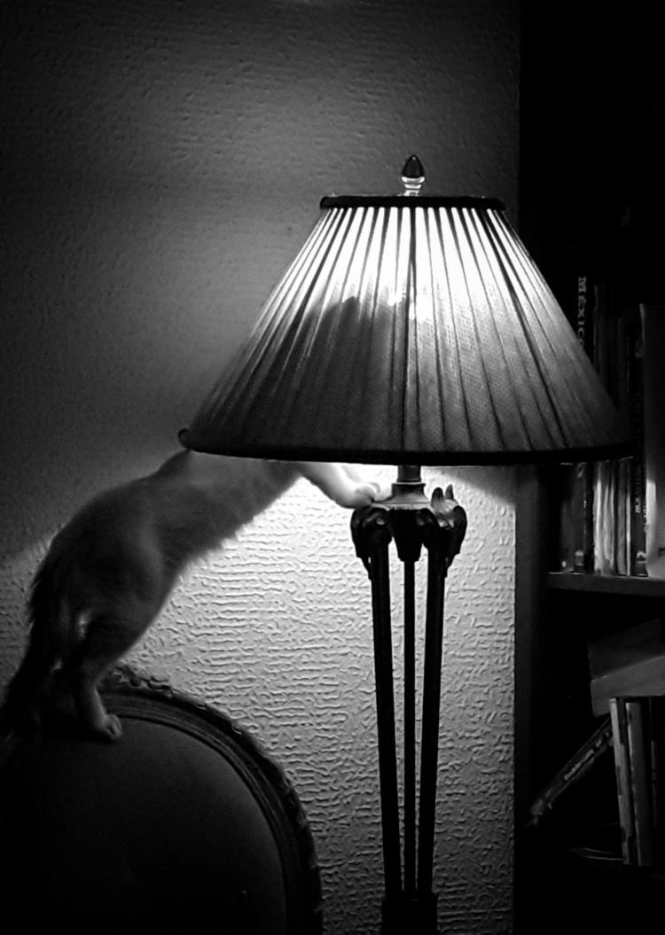 Curiosity. ~~#blackandwhite - photography - ccingreece   ello
