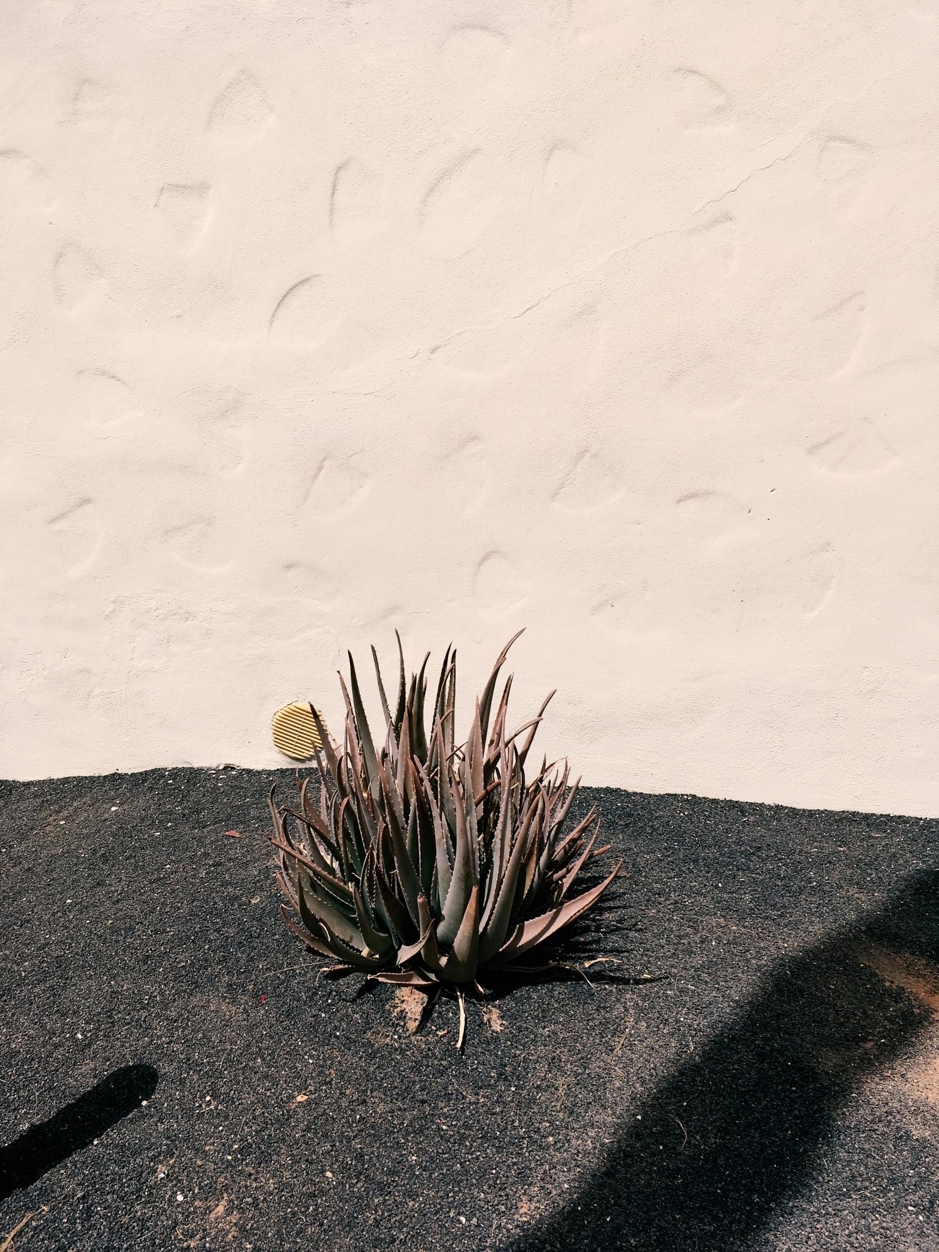 Fuerteventura impressions