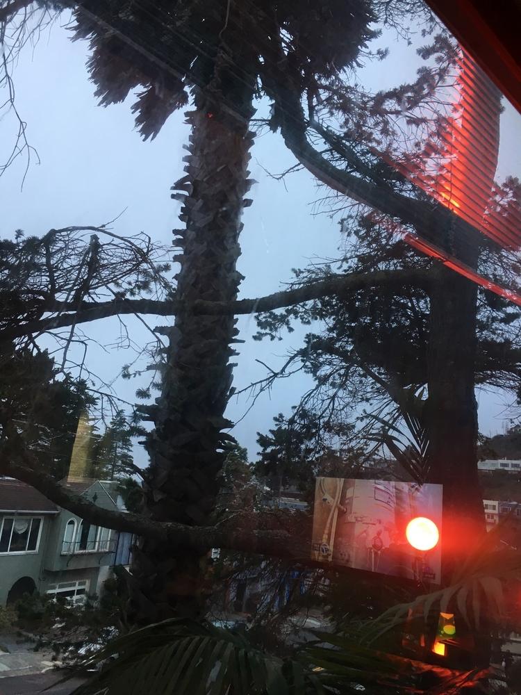 Palm, Trees, WashingoniaRubusta - hatun | ello