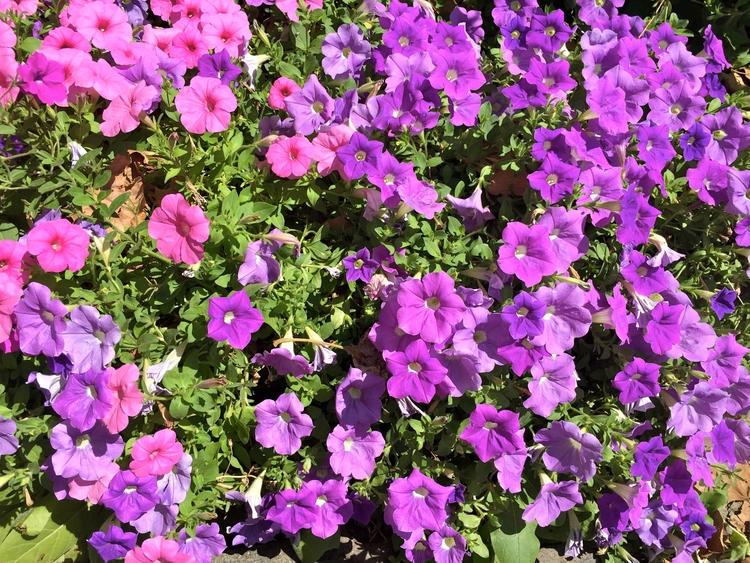 Flores enfeitam Parque Bryant e - antoniomg | ello