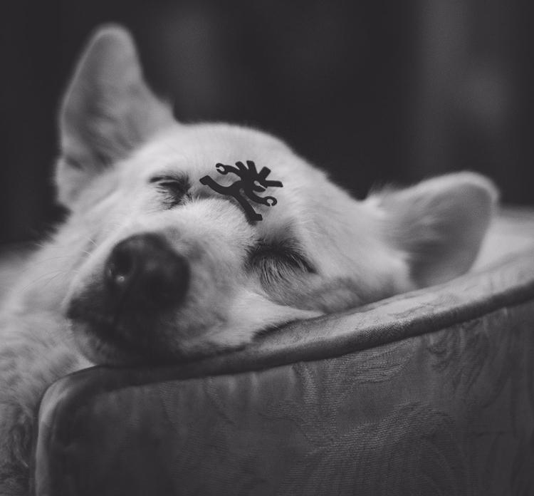 lupe, cute - dog, white, blanca - natxodiego | ello