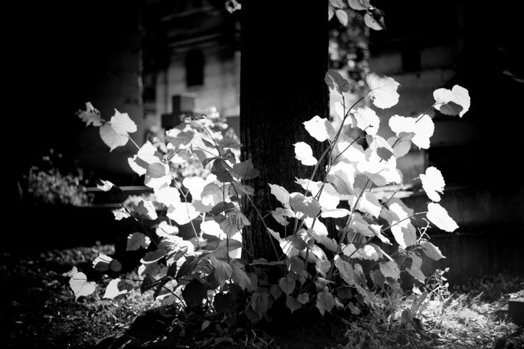 Ray light... Père Lachaise, Par - flommeunier | ello