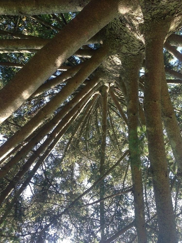 trees - nicoledesiree | ello