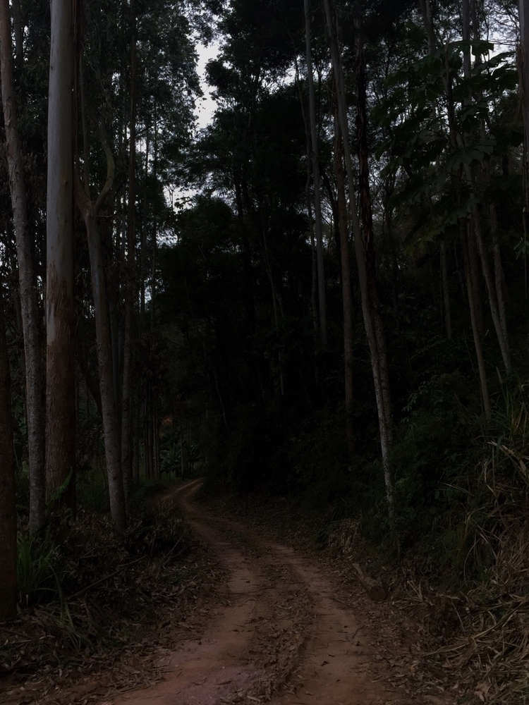 forest, dark - luizcalvi | ello