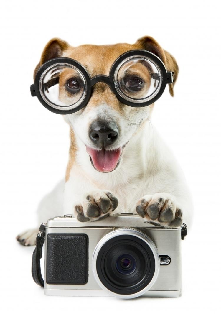 concerned, pix canine companion - rxmobility | ello