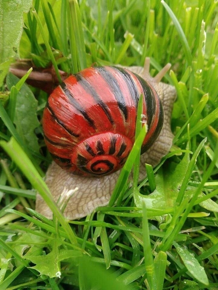 snailproject - atasieigeo | ello