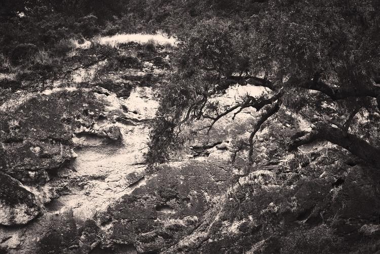 trail hits wall. WebSite - monochrome - tychobrown | ello