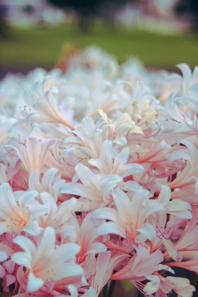 nature, flowers, naturephotographer - chasitey | ello