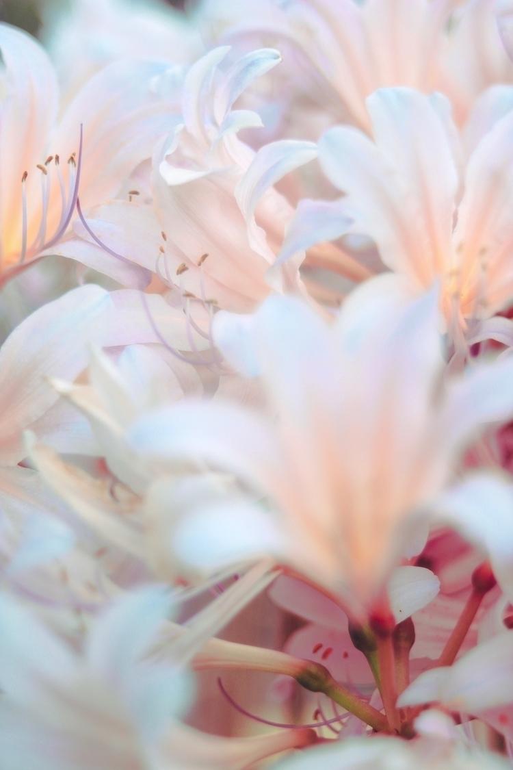 naturephotographer, naturephotography - chasitey | ello