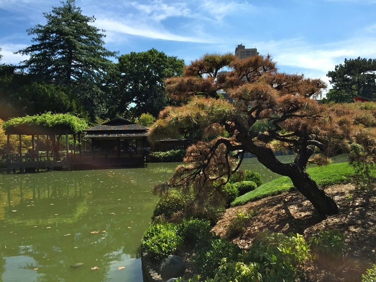 Jardim Japonês Pond Botânico Br - antoniomg | ello