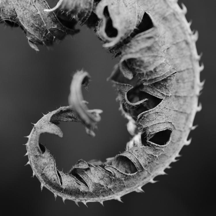 Dragon Tail Dragons Tail. love  - johnmullinax | ello