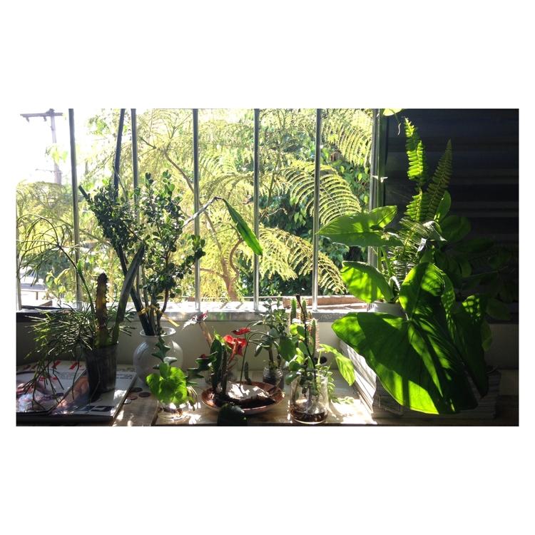 reminder nature bedroom - plants - blackulla | ello