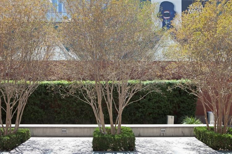 Trees, MOCA, Los Angeles Dougla - odouglas | ello