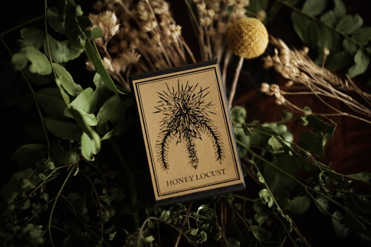 Honeylocust blossoms- listing b - forstrangewomen | ello