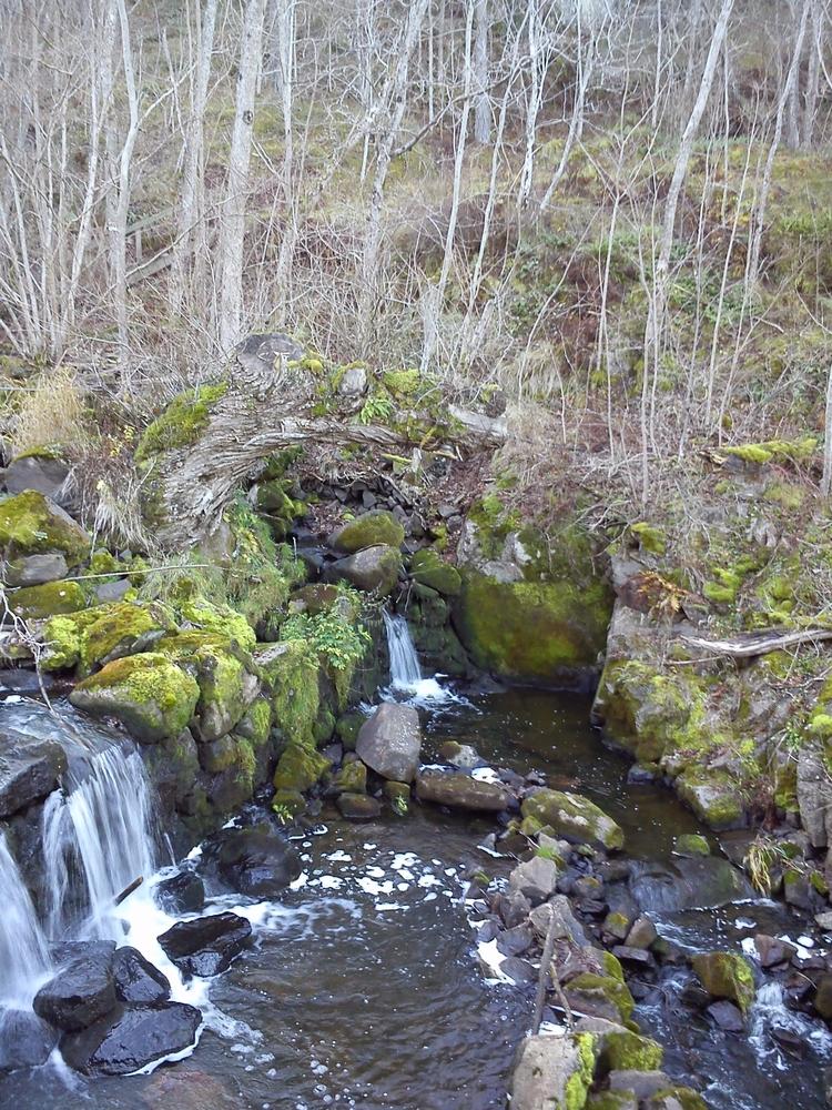 af - Mellyrn, Water, Woods, Photo - mellyrn | ello