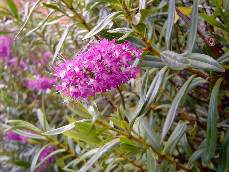 Flora nas proximidades Lago Tit - antoniomg | ello