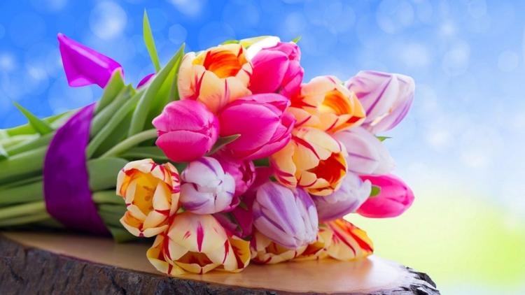 Daily Tulip – News World Sunday - robert-mcangus | ello