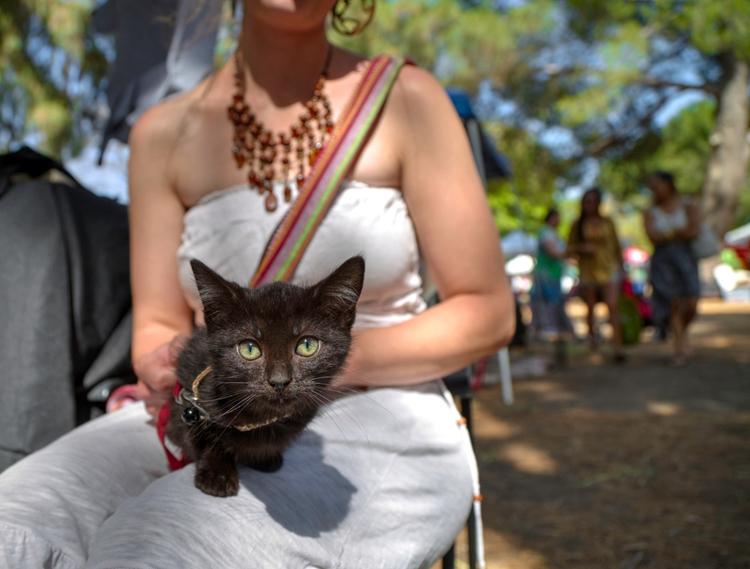 Adopt Kitten, Worldfest Van Nuy - ellomaggie | ello