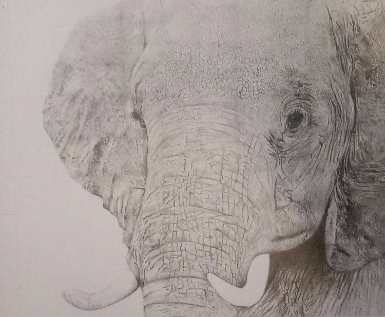 Elephant. 2017. Graphite pencil - jason2016   ello