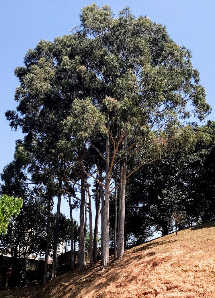 Árvores flagradas na Praça das  - antoniomg | ello