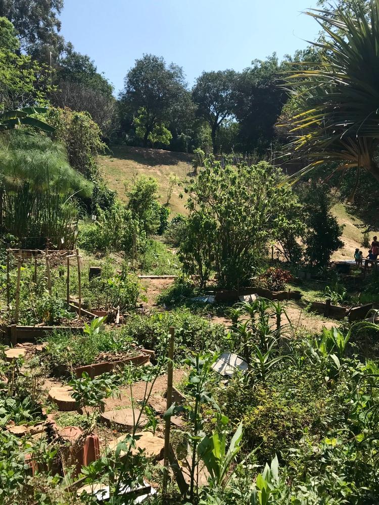 Horta comunitária, hoje comemor - antoniomg | ello