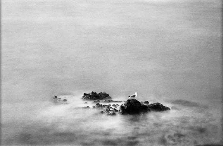 Immersed flow - photography, istillshootfilm - nonophuran | ello