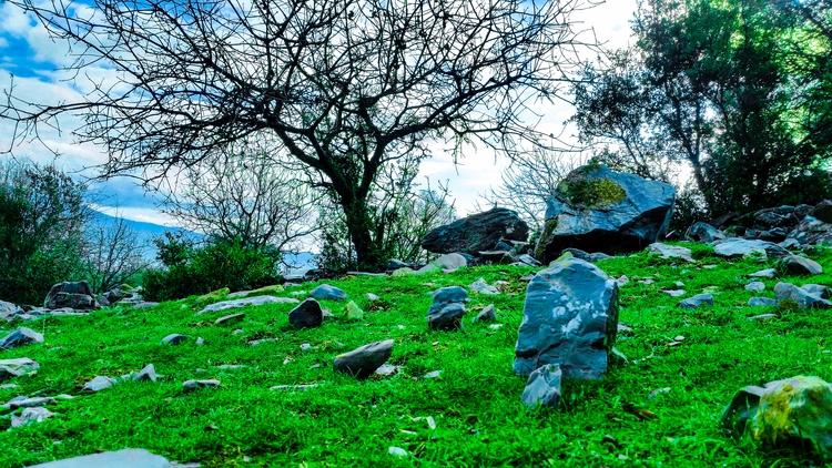 feel find peace - green, yolaçık - yabanyolu   ello