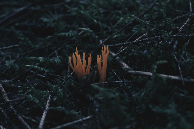 mushroom, coralfungi, funghi - blackwyrt | ello