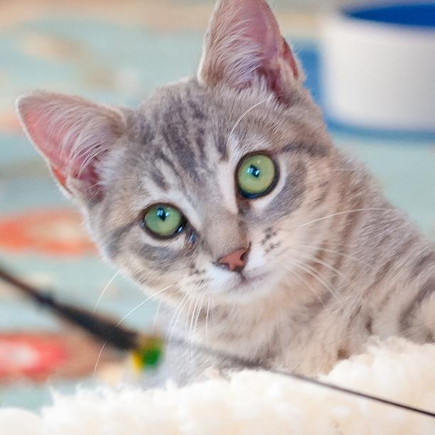COMMENT SHARE Meet: Mia, Female - snapcats   ello
