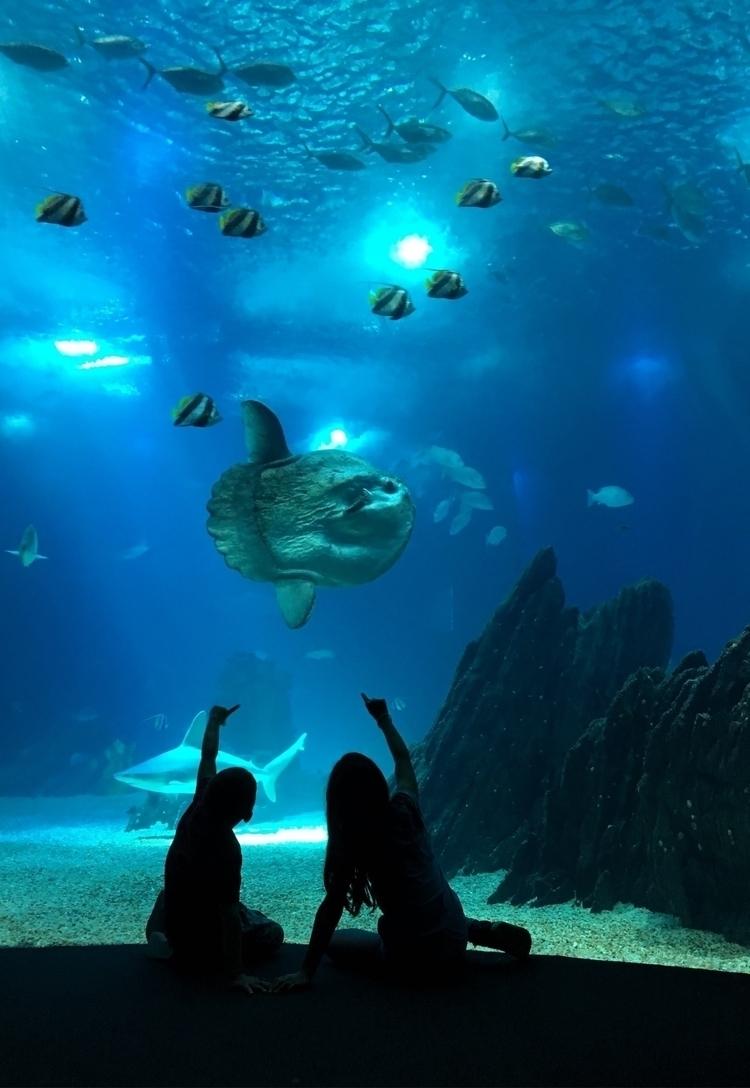 molamola, underwaterlove, iphonephotography - marcsinbox | ello