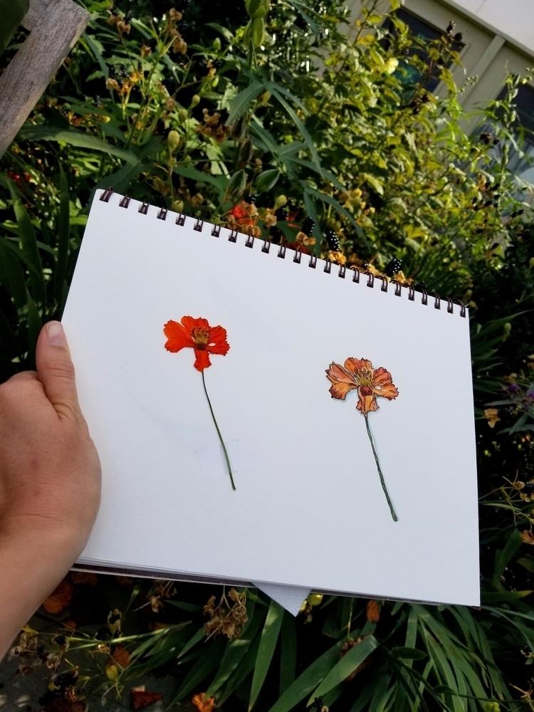 Summer sketchbook: watercolor + - mariesakdale | ello