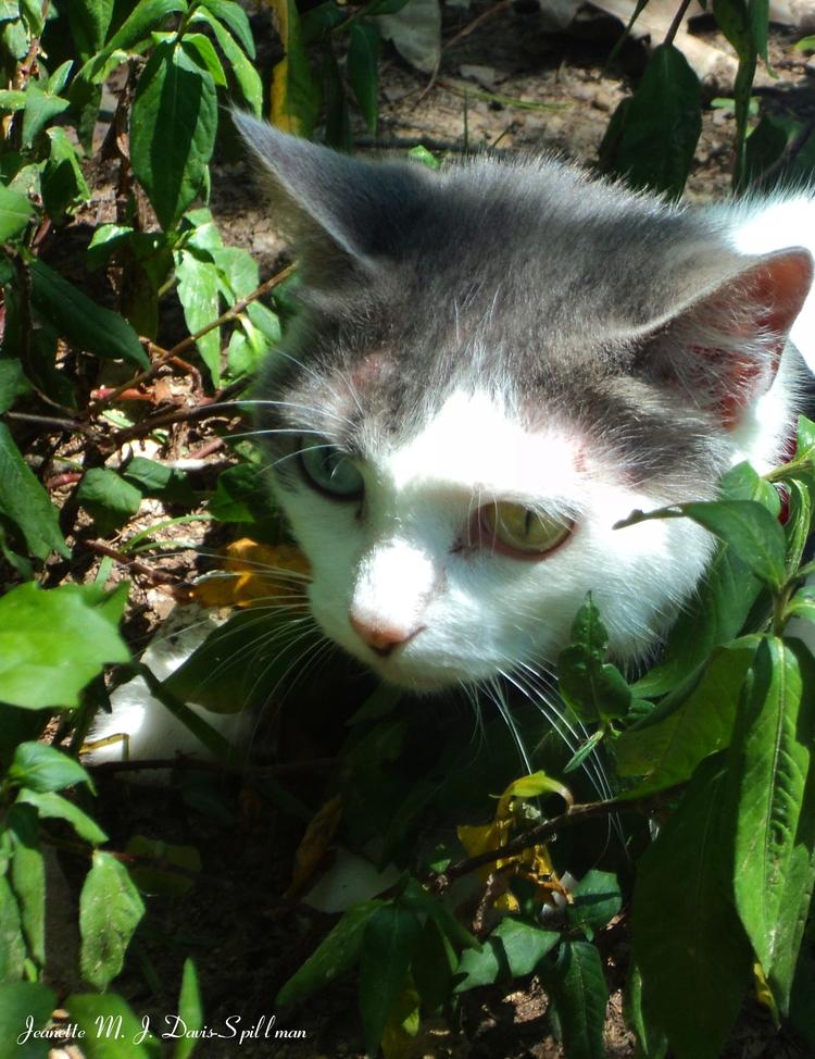Kolours loves titled Explorer - cats. - jeanettemjdavis-spillman | ello